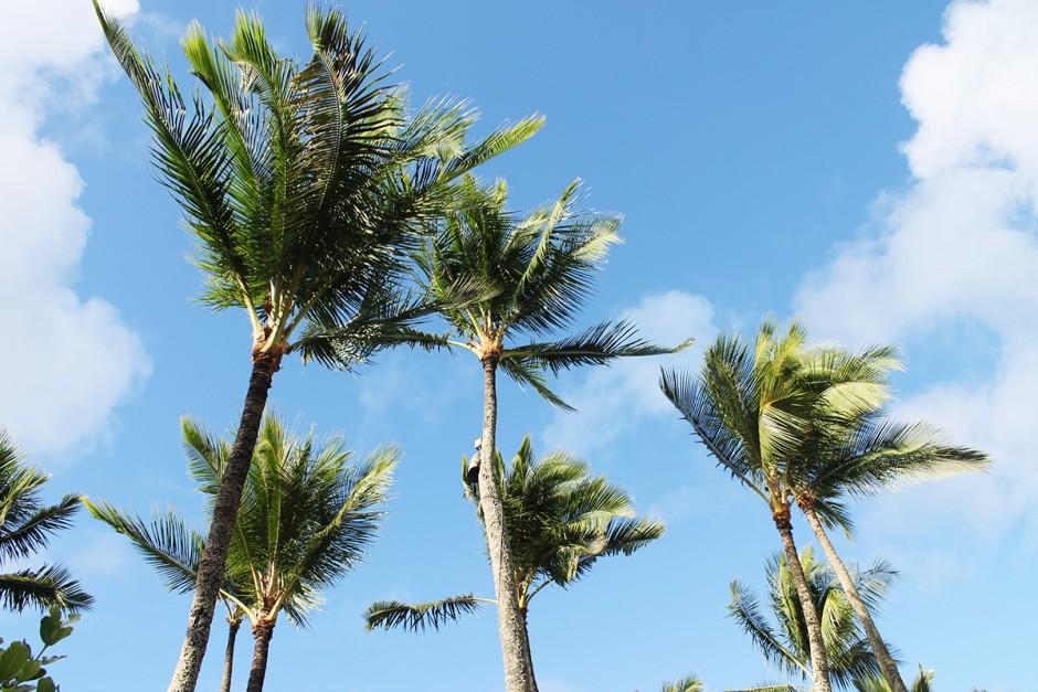 www.wildandfit.net-hawaii-kauai-lihue-marriott-hotel-7