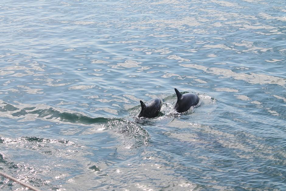 www.wildandfit.net-kauai-napali-coast-121
