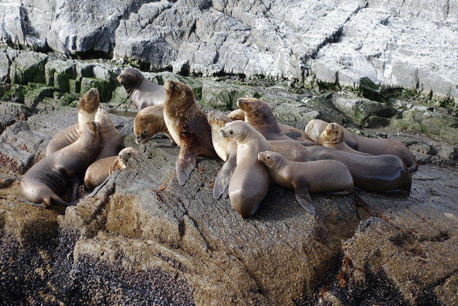 www.wildandfit.net_patagonien_feuerland-ushuaia-7