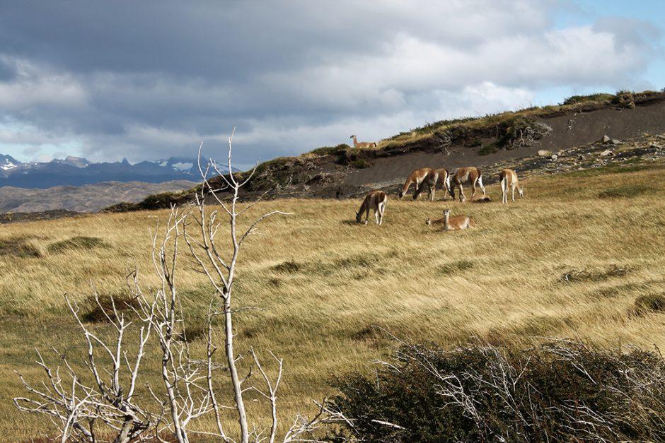 www.wildandfit.net_patagonien_torres_del_paine_chile_12