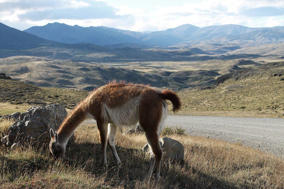 www.wildandfit.net_patagonien_torres_del_paine_chile_20
