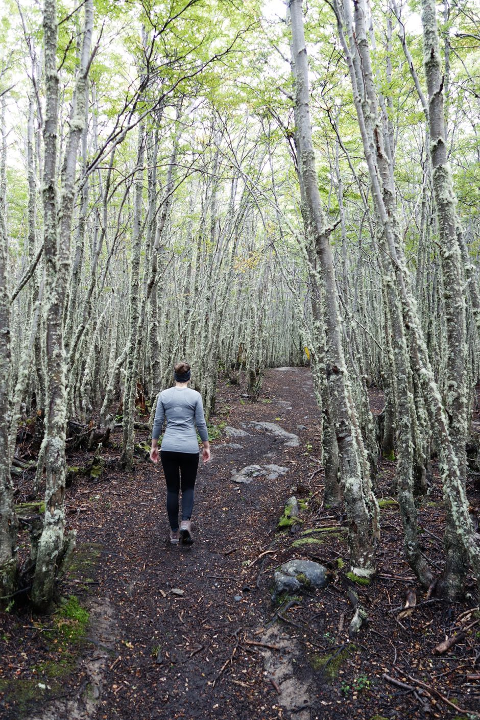 www.wildandfit.net-feuerland-patagonien-ushuaia-magellan-17