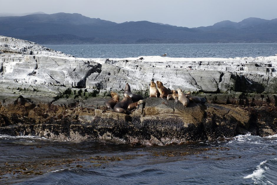 www.wildandfit.net-feuerland-patagonien-ushuaia-magellan-36