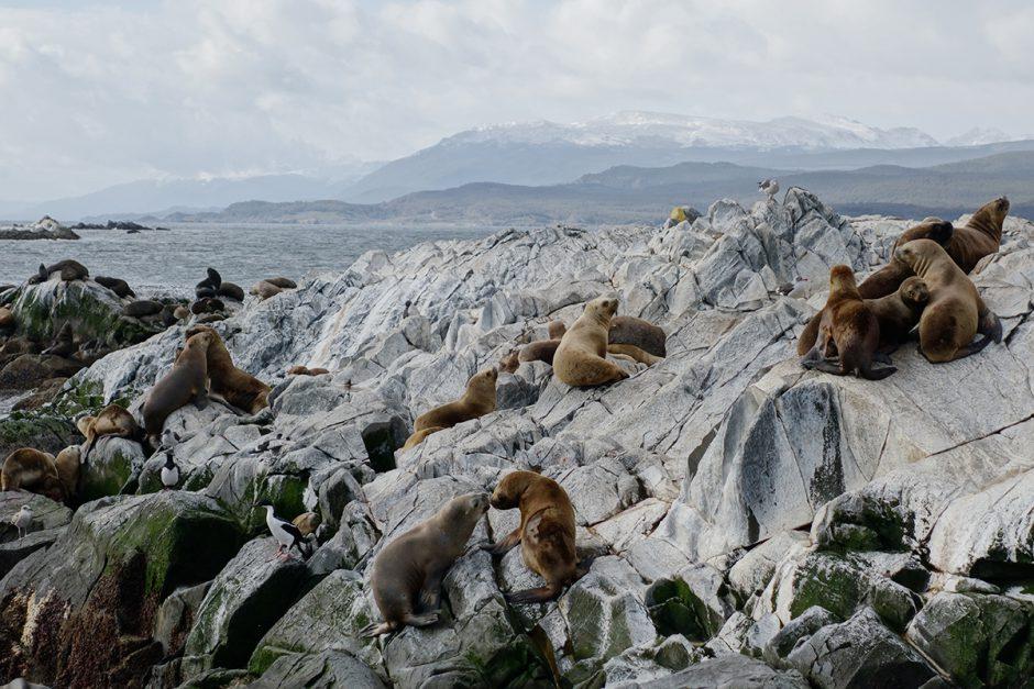 www.wildandfit.net-feuerland-patagonien-ushuaia-magellan-41