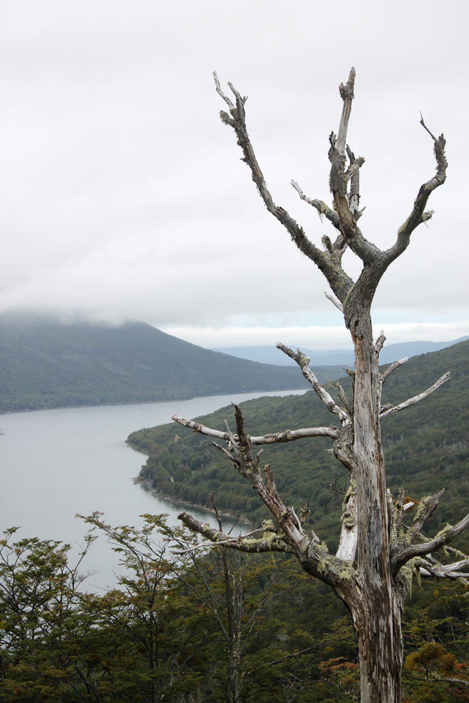 www.wildandfit.net-feuerland-patagonien-ushuaia-magellan-53