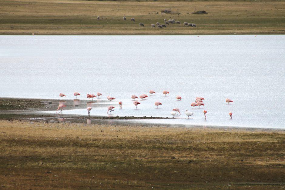 www.wildandfit.net-feuerland-patagonien-ushuaia-magellan-57