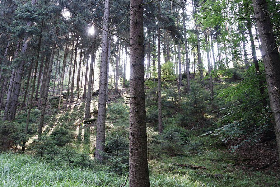 wildandfit-elbsandsteingebirge-saechsischeschweiz-schmilka-basteibrücke-1