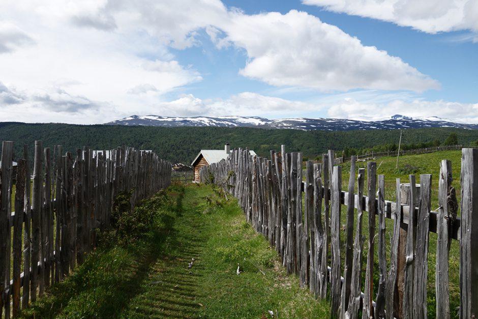 wildandfit-norwegen-reisen-jotunheimen-dovrjefjell-snohetta-30