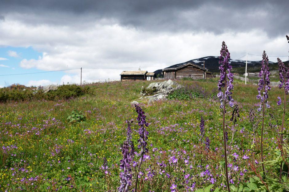 wildandfit-norwegen-reisen-jotunheimen-dovrjefjell-snohetta-32