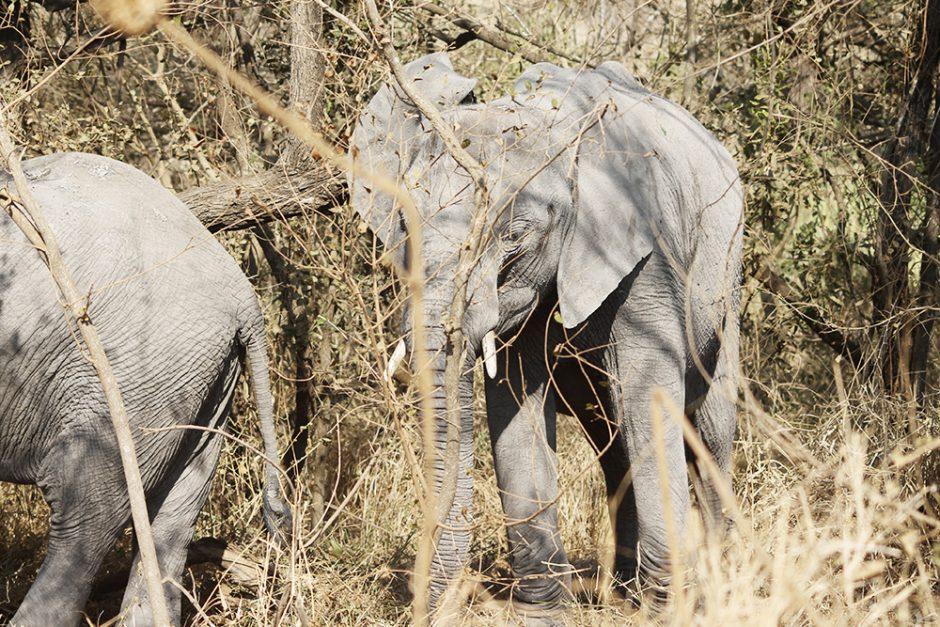 wildandfit-elefanten-patenschaft-spenden-1