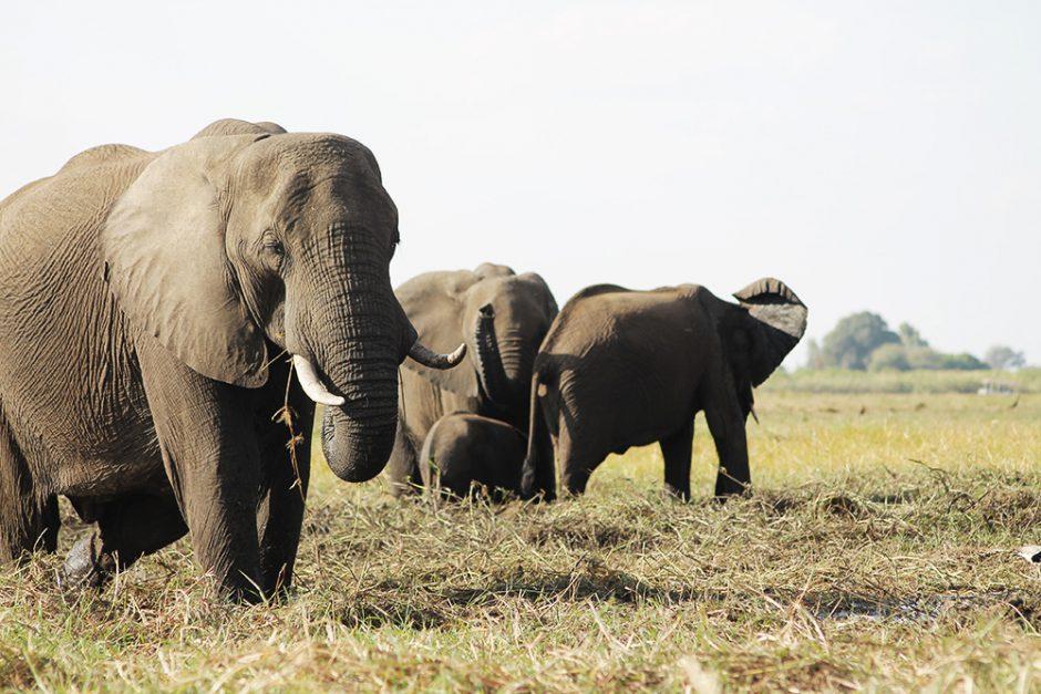 wildandfit-elefanten-patenschaft-spenden-10