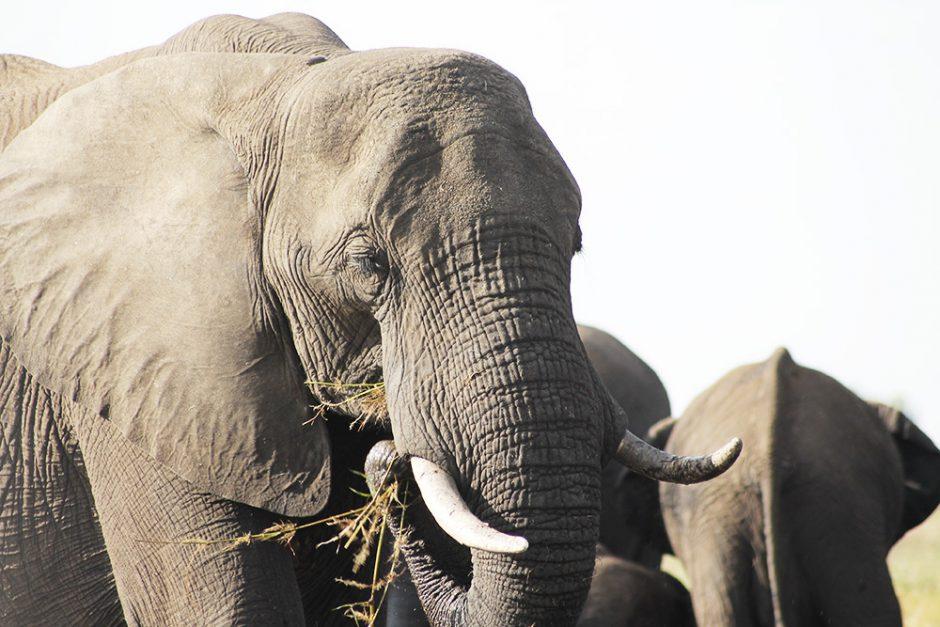 wildandfit-elefanten-patenschaft-spenden-11
