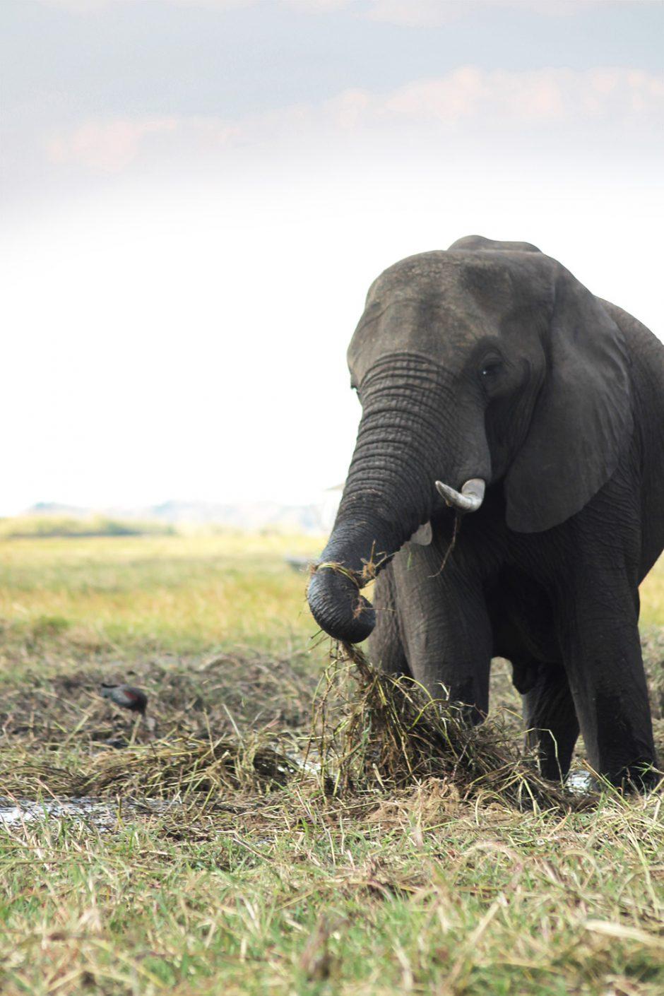 wildandfit-elefanten-patenschaft-spenden-12