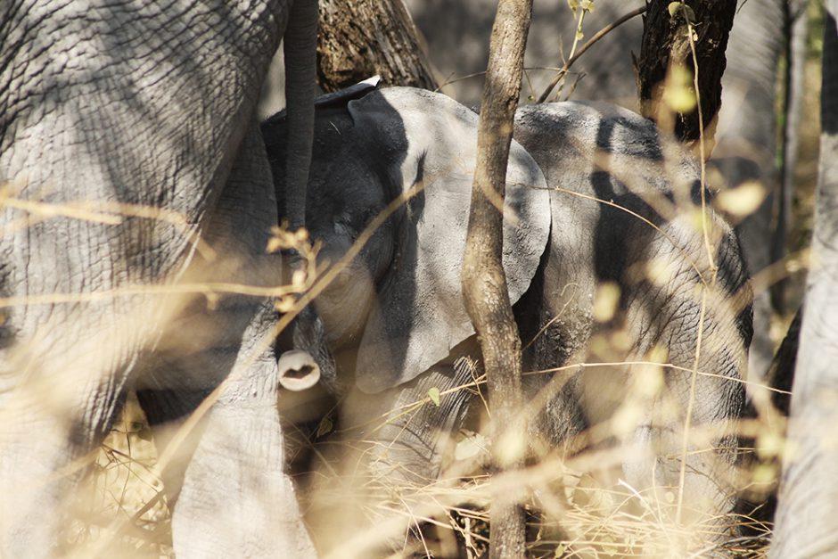 wildandfit-elefanten-patenschaft-spenden-3