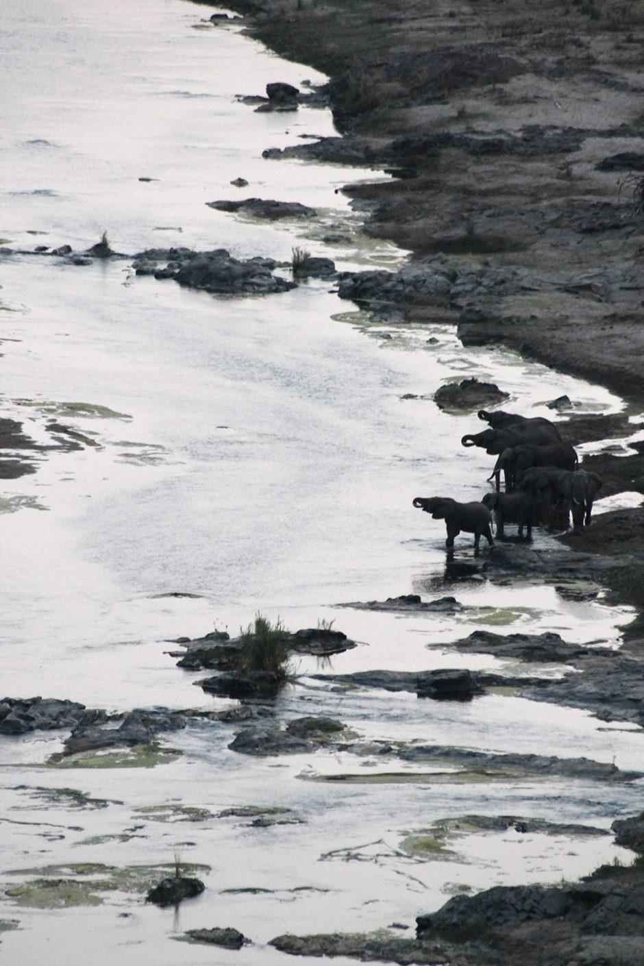 wildandfit-elefanten-patenschaft-spenden-4