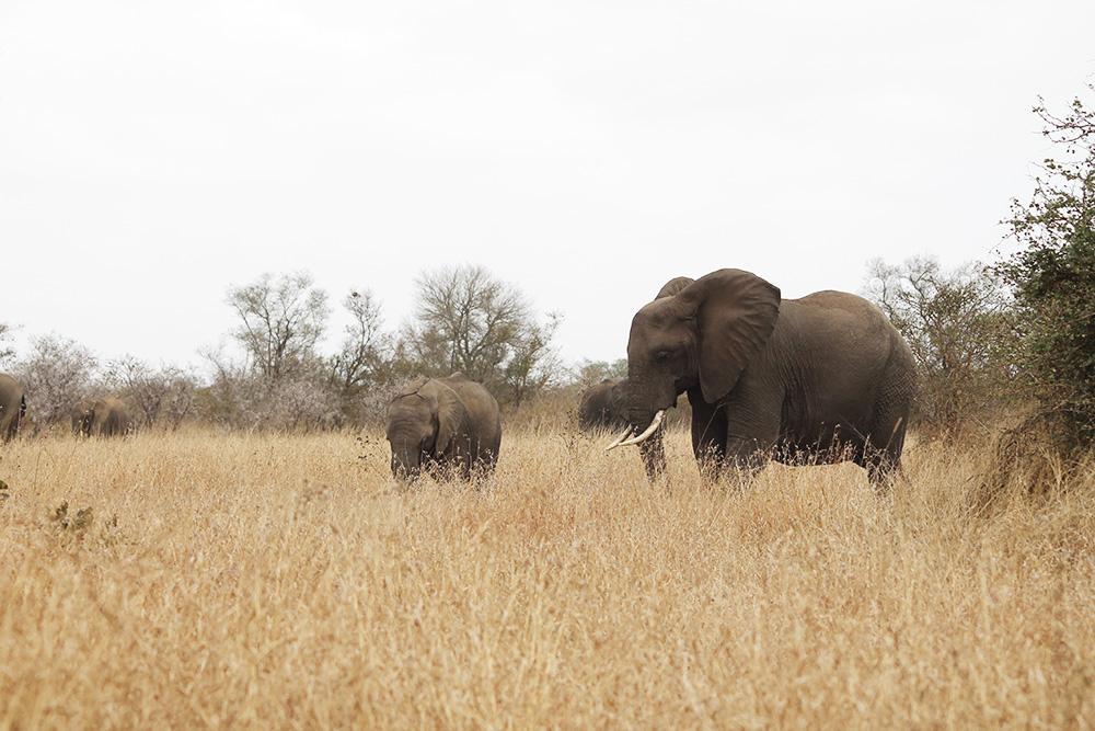 wildandfit-elefanten-patenschaft-spenden-5