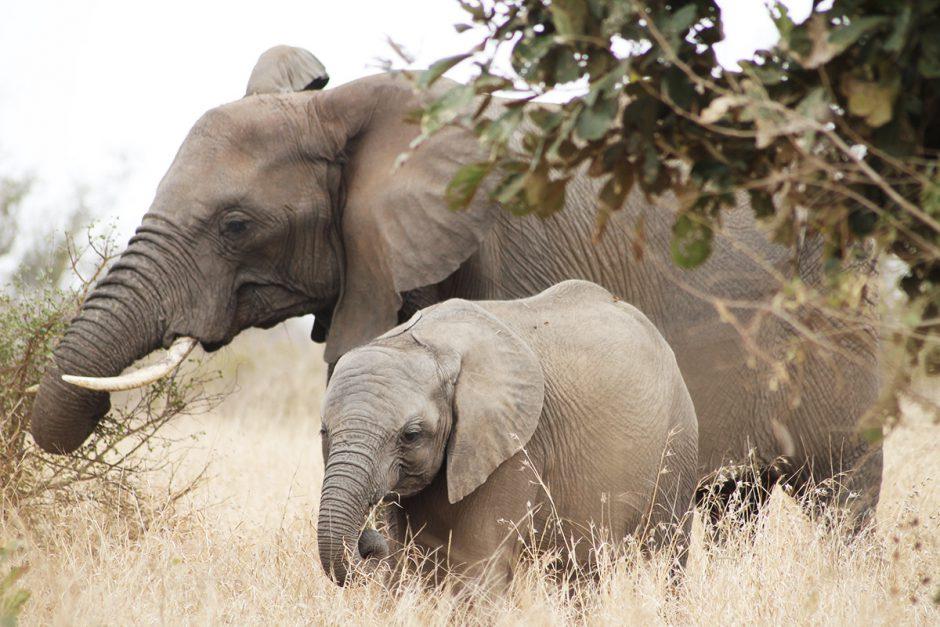 wildandfit-elefanten-patenschaft-spenden-6