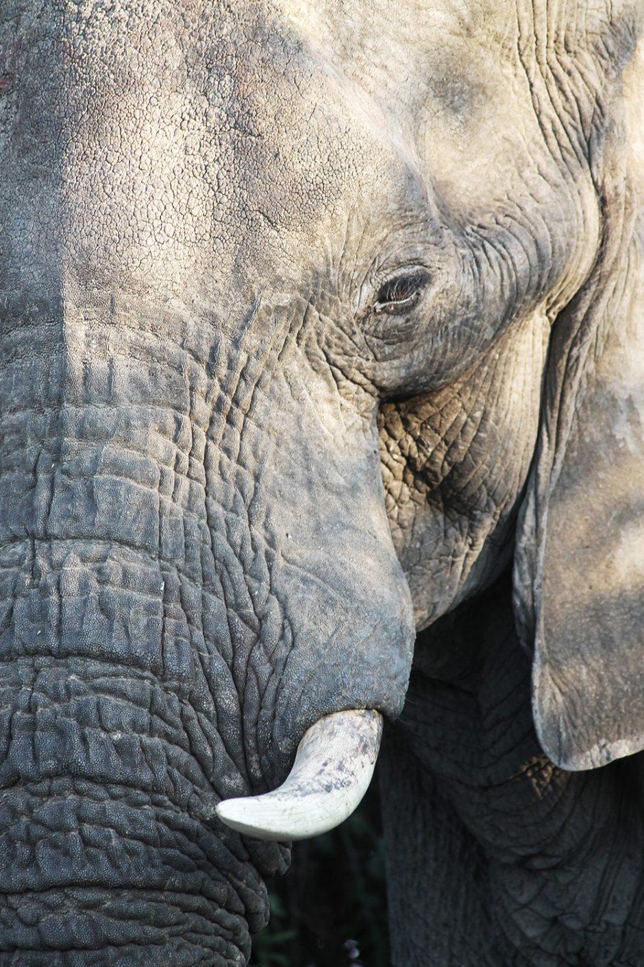 wildandfit-elefanten-patenschaft-spenden-8
