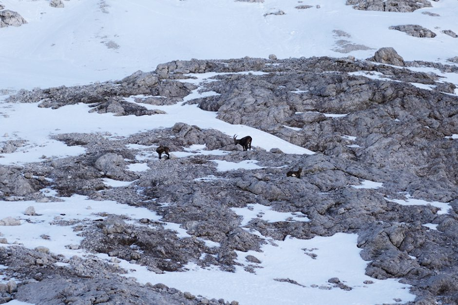 wildandfit-grödnerjoch.pisciaduspitze-dolomiten-12